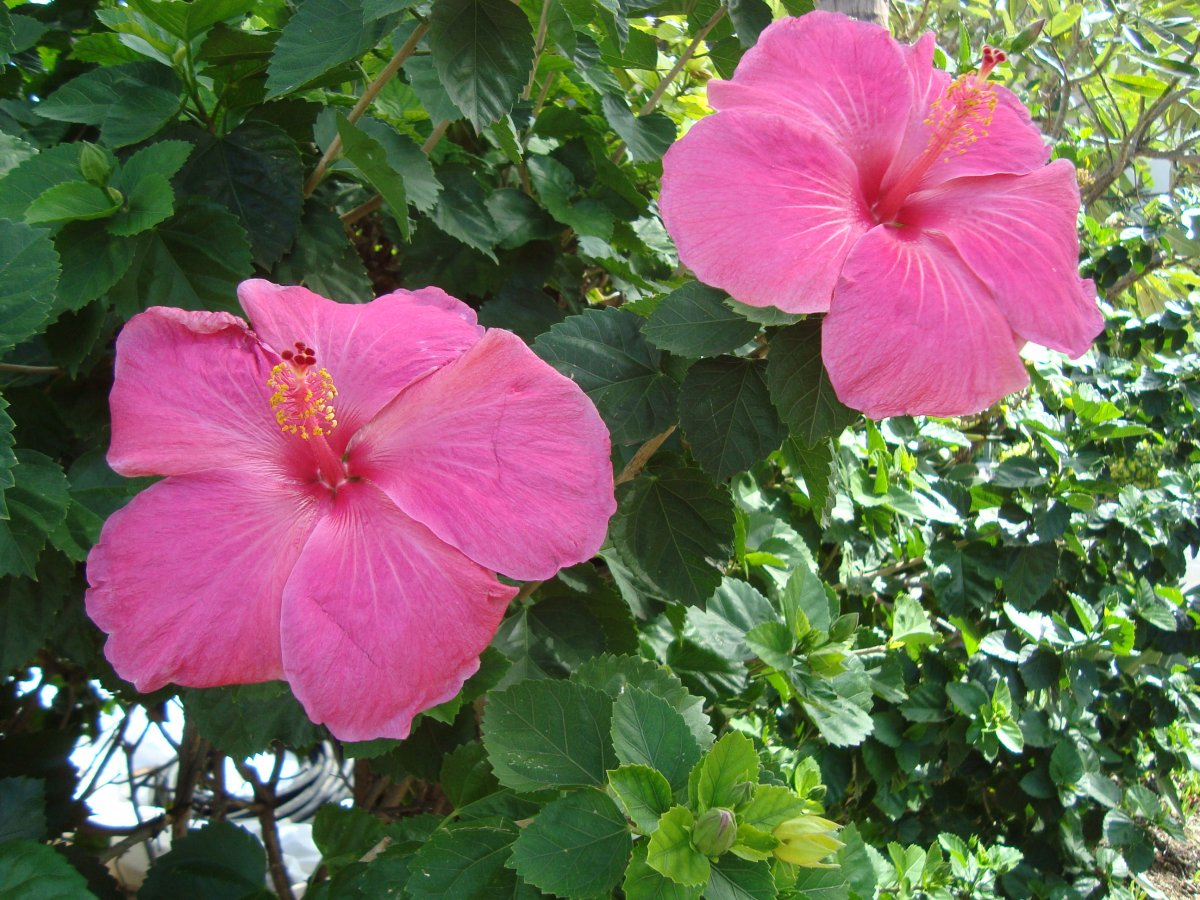 Flowers of the hawaiian islands izmirmasajfo