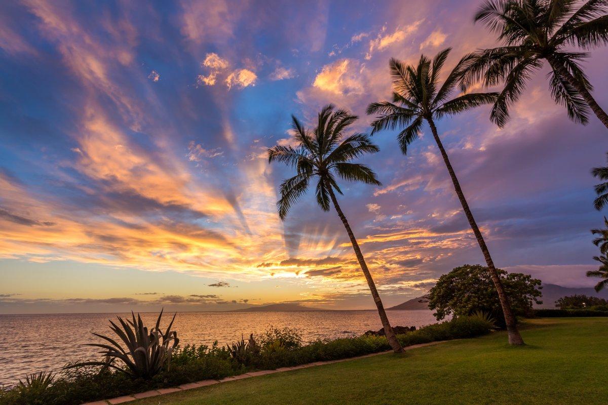 Visit Maui Or Big Island