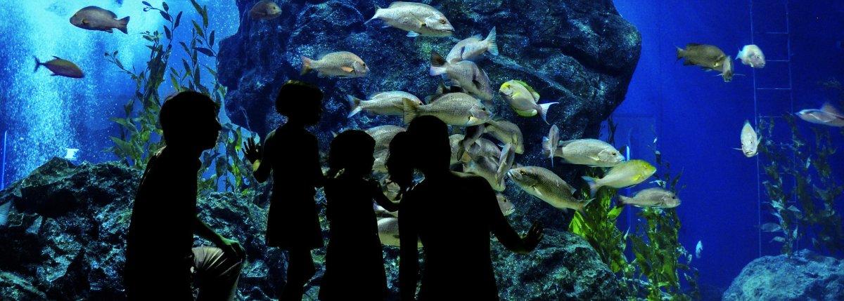 Aquarium Supplies Honolulu